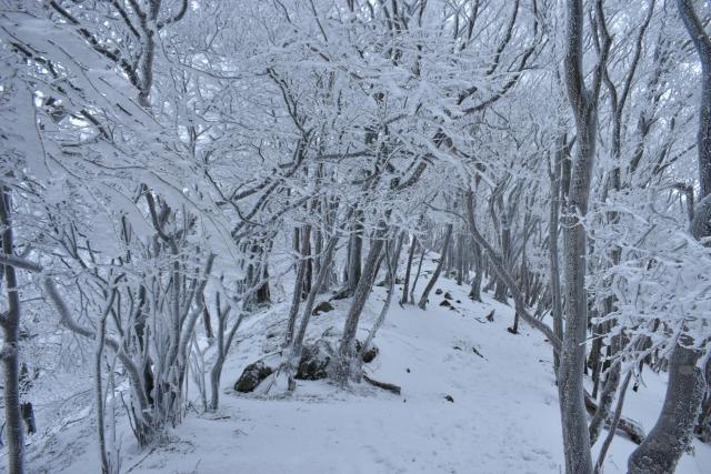 三重県松阪市で樹氷が見れる!
